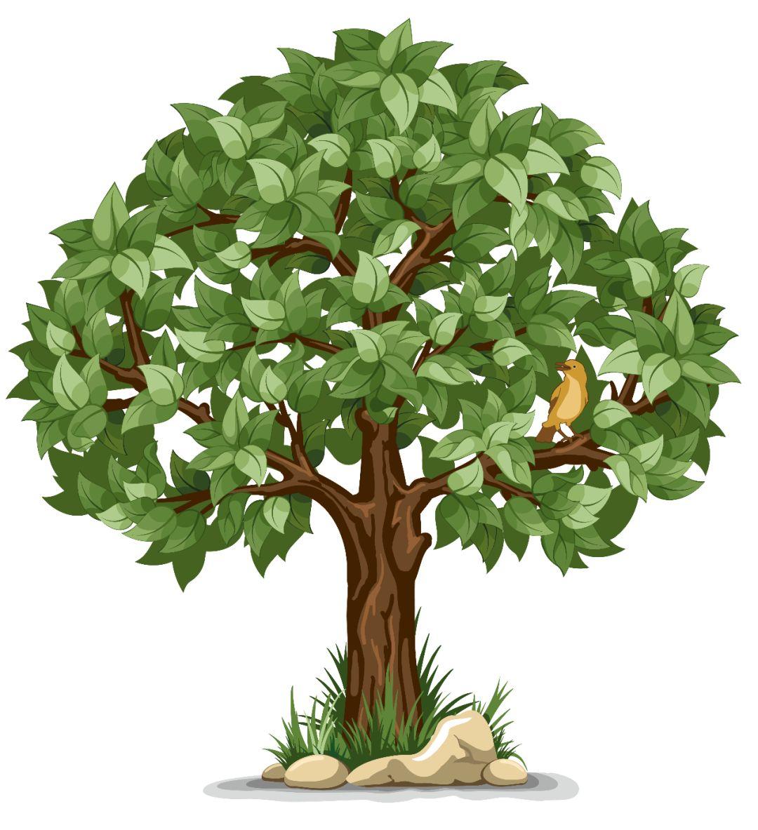 苗木价格变化快,如何抓住机会卖出高价?