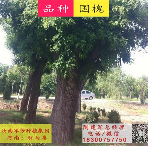 苗圃基地苗木种类展示2