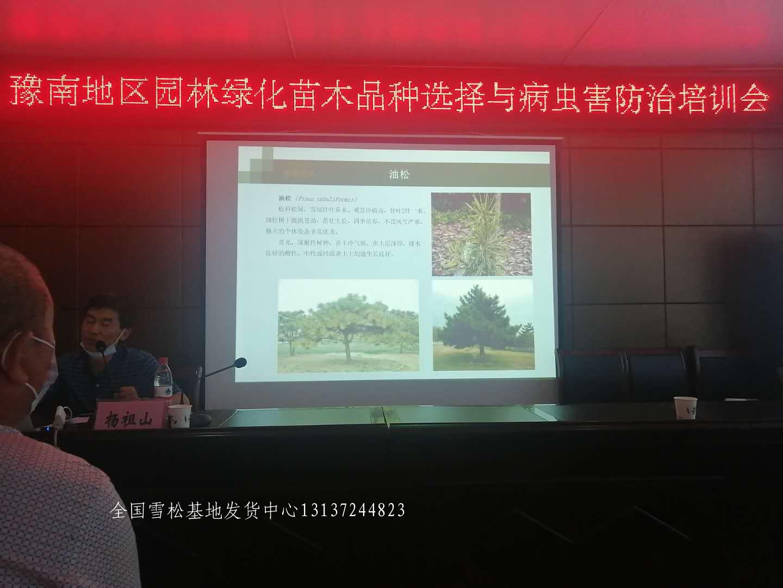 县级领导莅临召开先进苗木种植经验交流会 苗木 林业 花 雪松 汝南 第2张