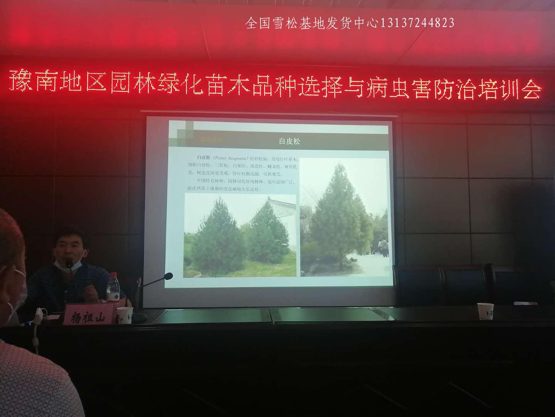 县级领导莅临召开先进苗木种植经验交流会 苗木 林业 花 雪松 汝南 第4张