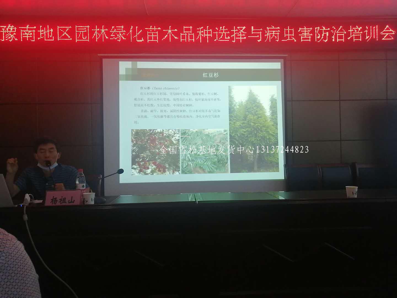 县级领导莅临召开先进苗木种植经验交流会 苗木 林业 花 雪松 汝南 第6张
