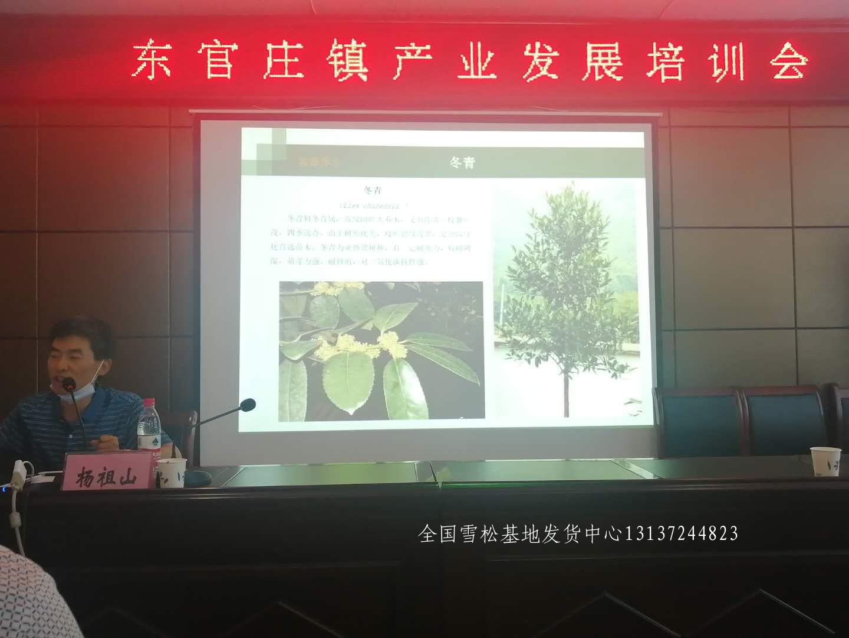 县级领导莅临召开先进苗木种植经验交流会 苗木 林业 花 雪松 汝南 第1张